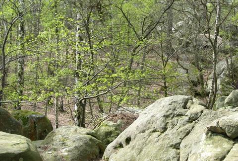 skály Fontainebleau